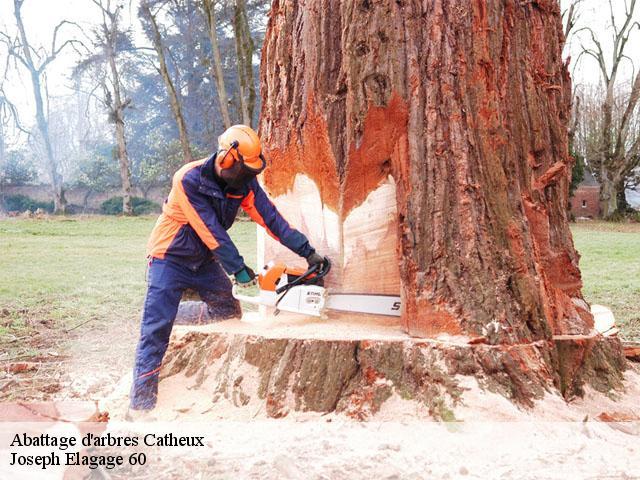 abattage arbre entreprise